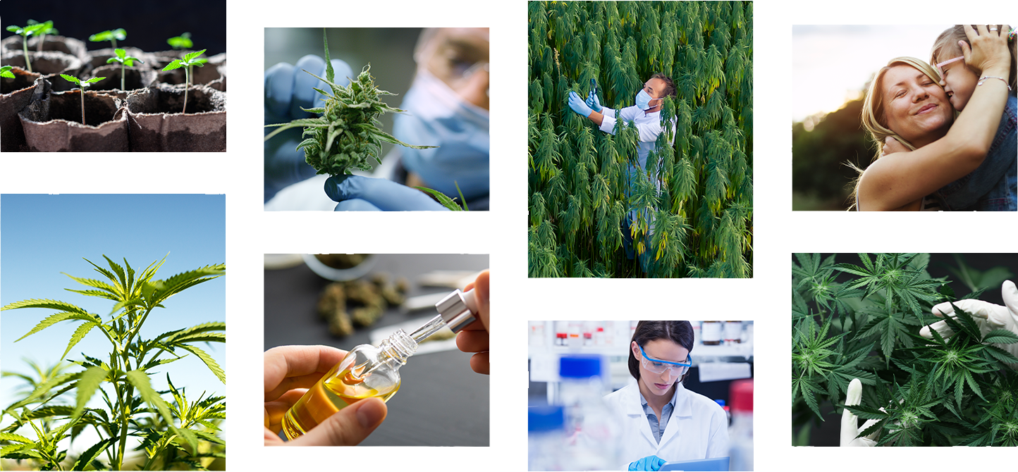 Photo grid of eight photos. Five are of hemp plants, one of a CBD tincture, one of a chemist in lab, one of a mother and son.